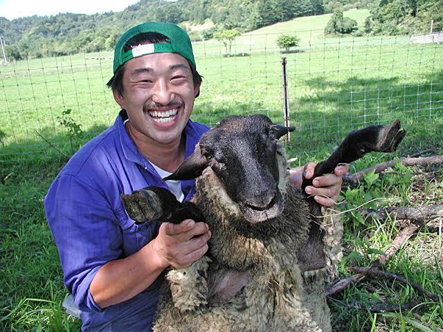 酒井伸吾(羊飼い)wiki経歴!年収や家族は?ラム肉が食べれるレストランは?【プロフェッショナル】
