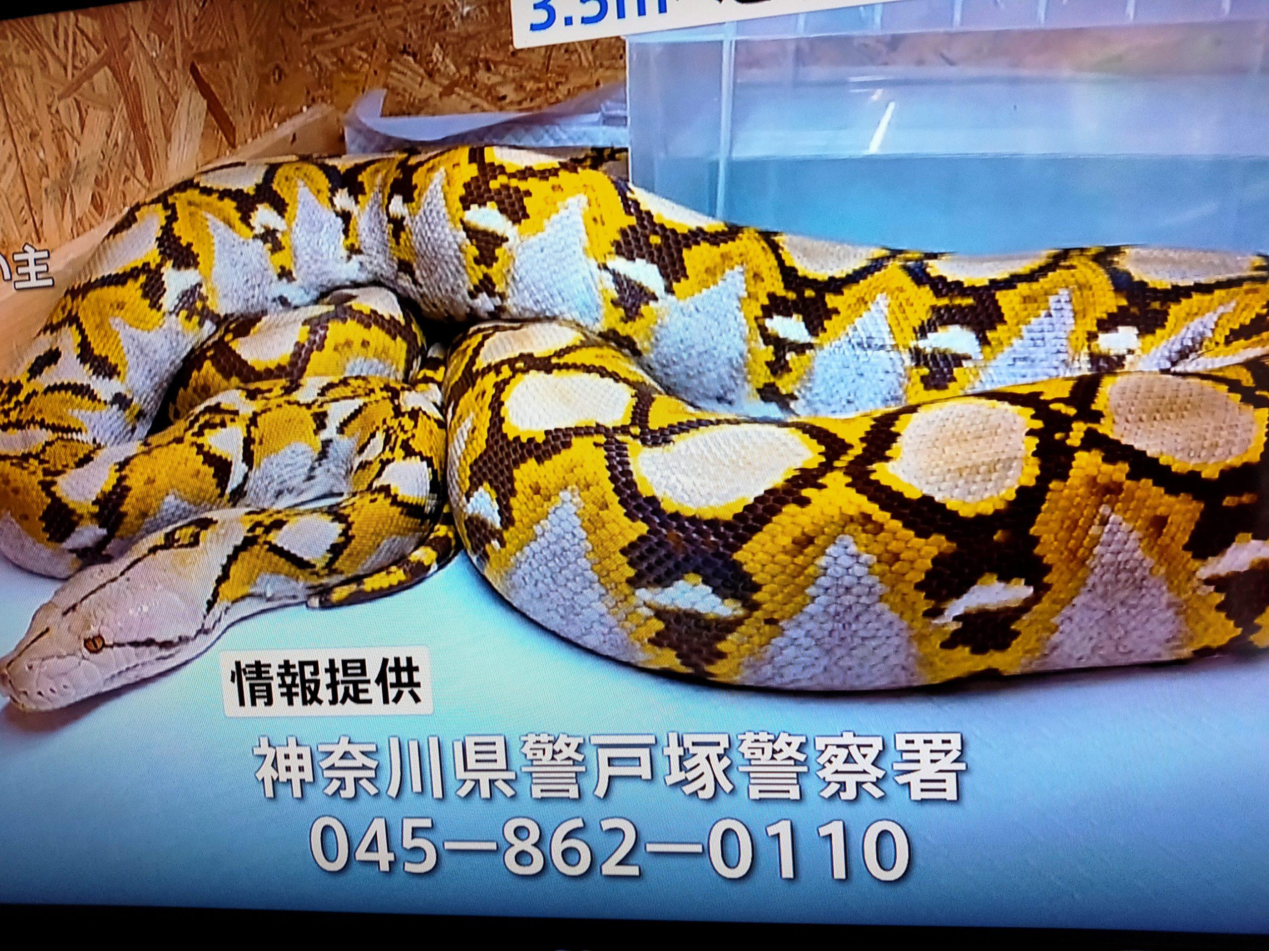 横浜ニシキヘビ脱走の住所は戸塚区名瀬町でマンション名特定か!飼い主の名前や顔画像は?